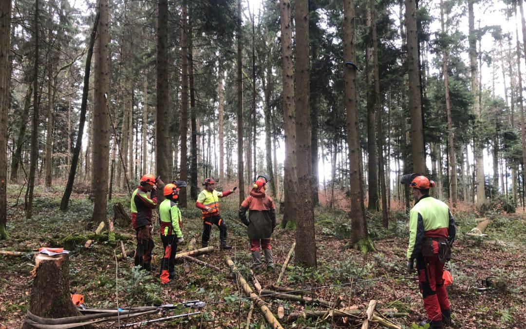 Formation de base sur la récolte du bois